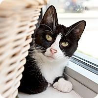 Adopt A Pet :: Haritte - Wilmington, DE