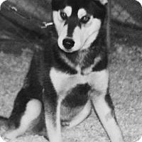 Adopt A Pet :: Jax - Corona, CA
