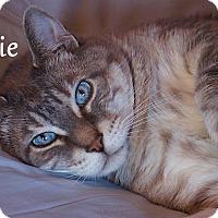 Adopt A Pet :: Louie - Waggaman, LA