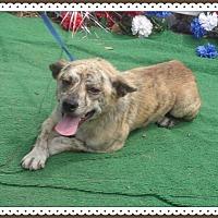 Adopt A Pet :: LOUIE - Marietta, GA