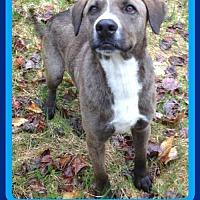 Adopt A Pet :: ERNIE - Sebec, ME