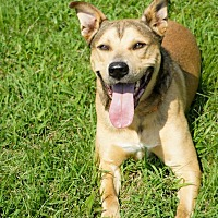 Adopt A Pet :: Trike - Franklin, TN