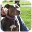 Photo 3 - American Staffordshire Terrier Dog for adoption in Berkeley, California - Violet
