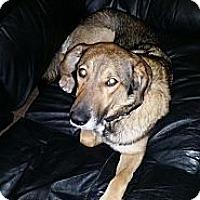 Adopt A Pet :: Kali - Saskatoon, SK