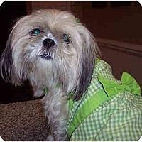 Adopt A Pet :: Precious - Mays Landing, NJ