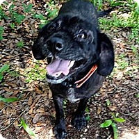 Adopt A Pet :: MABLE - Okatie, SC