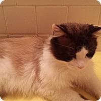Adopt A Pet :: Ducatti - Columbus, OH