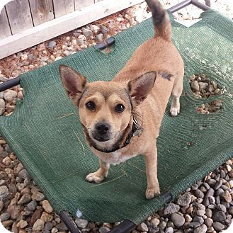 Terrier (Unknown Type, Small) Mix Dog for adoption in Freeport, Maine - Perla