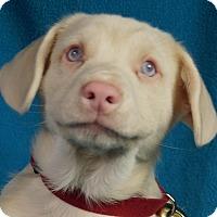Adopt A Pet :: Coby - Minneapolis, MN