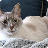 Adopt A Pet :: Tien (TD) 3.5.08 - Orlando, FL