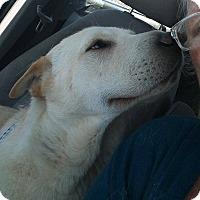 Adopt A Pet :: Noah - Apple Valley, CA