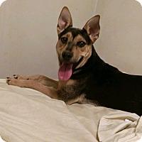 Adopt A Pet :: SUNDAY - Albuquerque, NM