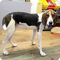 Adopt A Pet :: 17-d06-029 Danny - Fayetteville, TN