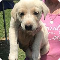 Adopt A Pet :: Omar - Glastonbury, CT