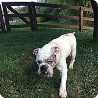 Adopt A Pet :: Winston - Cincinnati, OH