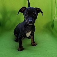 Adopt A Pet :: Jalapeno and Habanero - Toronto, ON