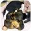 Photo 3 - Beagle Mix Puppy for adoption in Slidell, Louisiana - TAFFY
