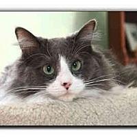 Adopt A Pet :: Jackson - Howell, MI