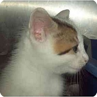 Adopt A Pet :: READY END OF SEPT - Little Neck, NY