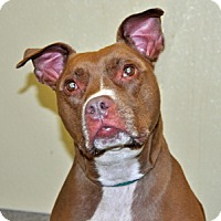 Adopt A Pet :: Coco - Port Washington, NY