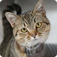 Adopt A Pet :: Bethany - Irvine, CA