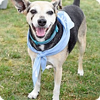 Adopt A Pet :: Ms.Penny - Knoxville, TN