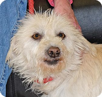 Terrier (Unknown Type, Small) Mix Dog for adoption in Spokane, Washington - Snoopy