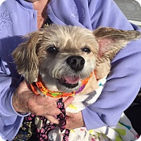 Adopt A Pet :: Mia - Sweetest Girl - Quentin, PA