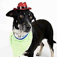Adopt A Pet :: COQUITO - Ft Lauderdale, FL