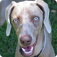 Adopt A Pet :: Claire - Birmingham, AL