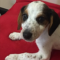 Adopt A Pet :: Freckles - Mt Sterling, KY