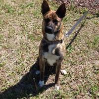 Adopt A Pet :: Elsie - Larned, KS