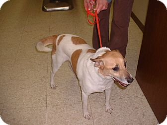 Terrier (Unknown Type, Small) Mix Dog for adoption in Sterling, Kansas - Flash