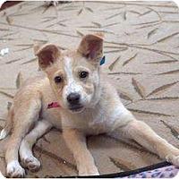 Adopt A Pet :: Tinkerbell - Wayne, NJ
