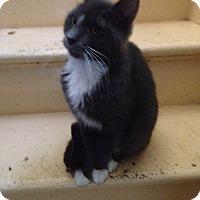 Adopt A Pet :: emo - Orillia, ON