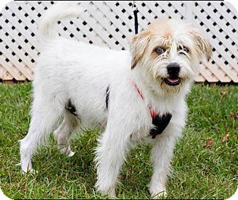 Terrier (Unknown Type, Medium) Mix Dog for adoption in Mandeville, Louisiana - Poppy