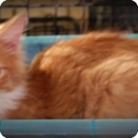 Adopt A Pet :: Sunny - Fairborn, OH
