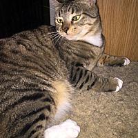 Adopt A Pet :: Pebbles - Monrovia, CA