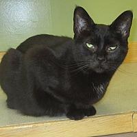 Adopt A Pet :: Jessica - Toledo, OH