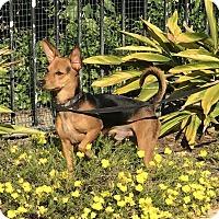 Adopt A Pet :: Elmo - San Diego, CA