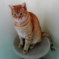 Adopt A Pet :: Squish - Rio Rancho, NM