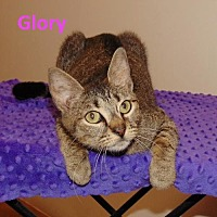 Adopt A Pet :: Glory - Mountain View, AR