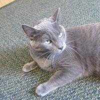 Adopt A Pet :: Calvin - Northfield, MN