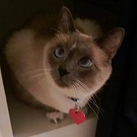 Adopt A Pet :: Roxy - Yorba Linda, CA