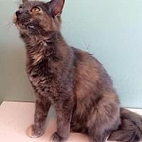 Adopt A Pet :: Penny - Port Clinton, OH