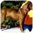 Photo 4 - Labrador Retriever Mix Dog for adoption in Pawling, New York - RILEY