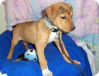 Terrier (Unknown Type, Medium) Mix Dog for adoption in Waldorf, Maryland - Apallo #343