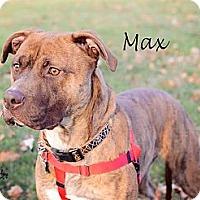 Adopt A Pet :: Max - Chicago, IL