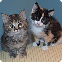 Adopt A Pet :: Libby *PENDING - Xenia, OH