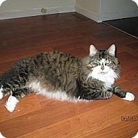 Adopt A Pet :: Taz - Port Republic, MD
